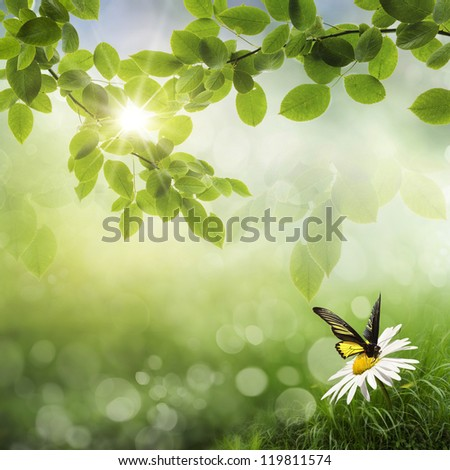 Fresh Spring bokeh background  Butterfly and daisy on vesennnem background with leaves - stock photo