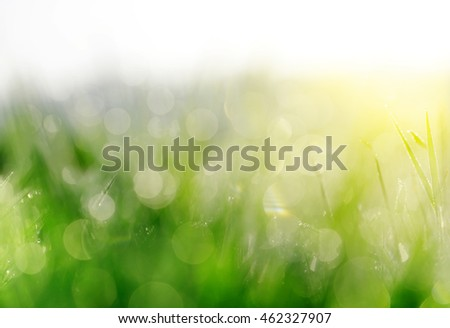 Fresh spring bokeh in green grass. Soft Focus. Abstract Nature Background