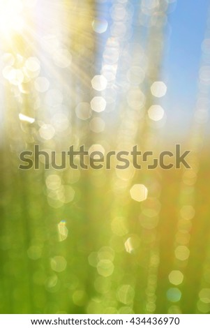 Fresh spring bokeh. Soft Focus. Abstract Nature Background