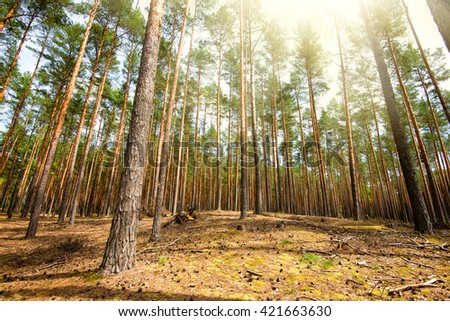 fresh spring fine forest at sunny day, nature background concept - stock photo