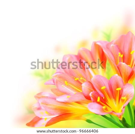 Fresh spring flowers border isolated on white background? - stock photo