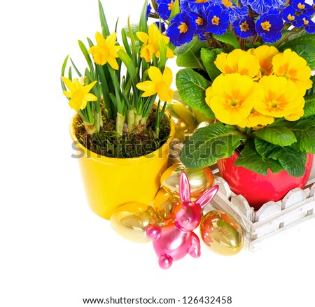 fresh spring flowers with easter decoration. primulas and narcissus in pot on white background - stock photo