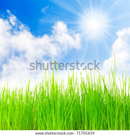 Fresh spring grass. - stock photo