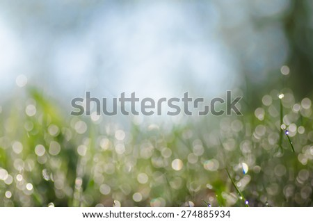 fresh spring grass covered with morning dew - stock photo