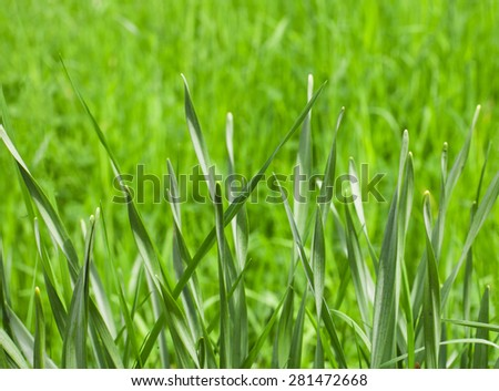 Fresh spring grass on a meadow with a blurred green background - stock photo