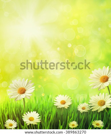 Fresh spring grass with daisies against golden background - stock photo