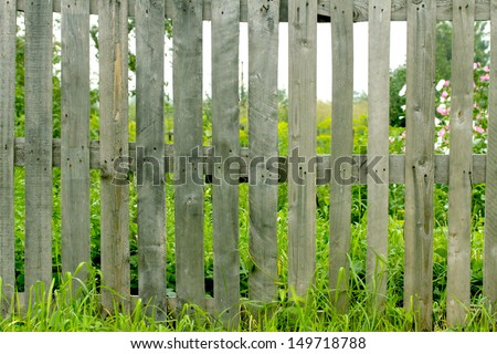 Fresh spring green grass and leaf plant over wood fence background - stock photo