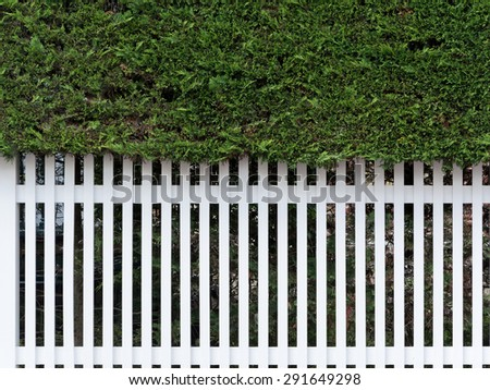 Fresh spring green grass and leaf plant over wood fence background / Wooden fence and grass./ seamless closeup texture of white garden fence - stock photo