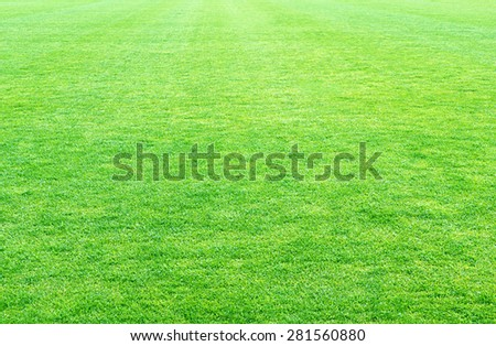 fresh spring green grass, green grass texture or background. - stock photo