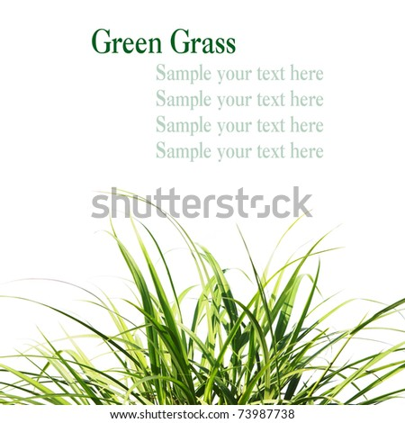 Fresh Spring green Grass isolate with space for your text - stock photo