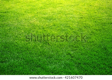 fresh spring green grass, natural background texture - stock photo