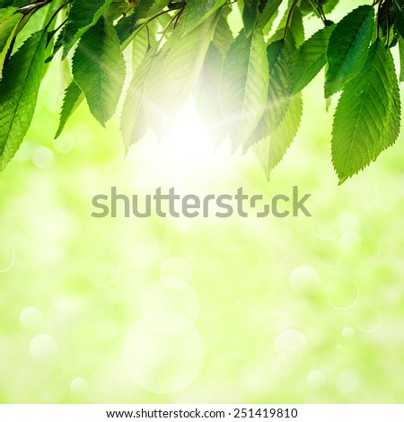 Fresh spring green leaf of a tree, on a background of green sunlight - stock photo