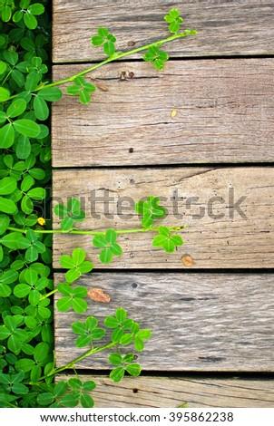 Fresh spring green leaf plant on Wood Background, Toned image. - stock photo
