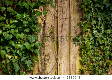 Fresh spring green leaf plant over wood fence background - stock photo