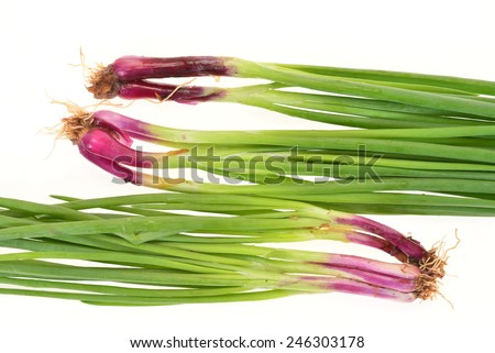 Fresh Spring Onions Isolated on White Background - stock photo