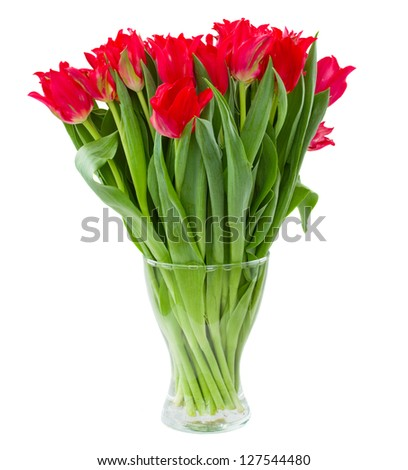 fresh spring red tulips in vase isolated on white background - stock photo