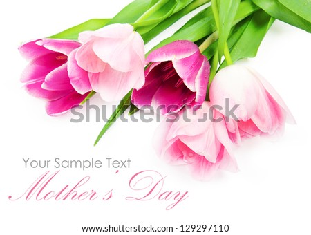 Fresh spring tulip flowers isolated on white - stock photo