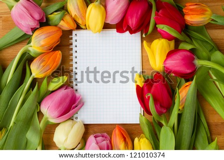 fresh spring tulips laying on wooden table - stock photo