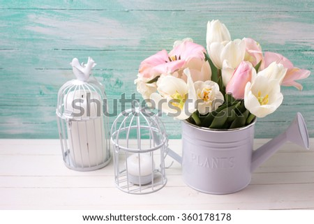 Fresh  spring white and pink  tulips and narcissus in decorative watering can  and candles on white painted wooden background against turquoise wall. Selective focus. Place for text.  - stock photo