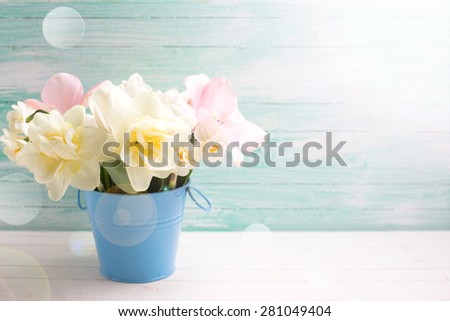 Fresh  spring white narcissus and pink tulips in bucket in ray of light  on white painted wooden background against turquoise wall. Selective focus. Place for text.  - stock photo