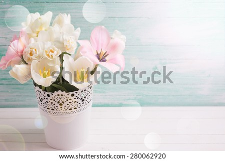 Fresh  spring white narcissus and pink tulips in  white bucket  in ray of light  on white painted wooden background against turquoise wall. Selective focus. Place for text.  - stock photo