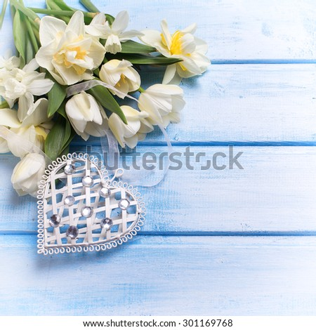 Fresh  spring white tulips and narcissus flowers  and decorative heart on blue  wooden background. Selective focus. Place for text. Square image.  - stock photo