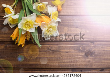 Fresh  spring yellow narcissus and  tulips flowers in ray of light  on brown  painted wooden planks. Selective focus. Place for text.  - stock photo