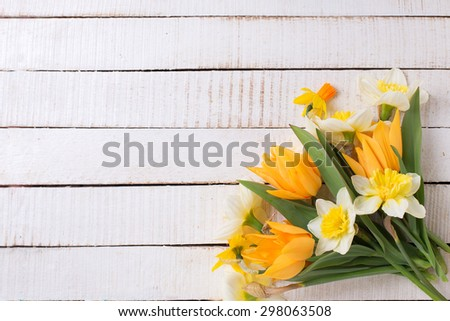 Fresh  spring yellow narcissus and  tulips flowers  on white  painted wooden planks. Selective focus. Place for text.  - stock photo