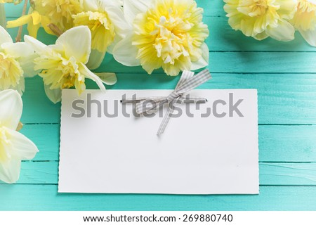 Fresh  spring yellow narcissus  flowers and empty tag  on green painted wooden planks. Selective focus. Place for text. Toned image.  - stock photo