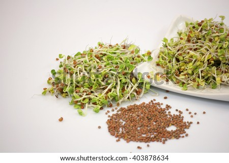 Fresh sprouts, isolated on white background - stock photo