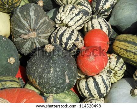Fresh Squash Produce - stock photo
