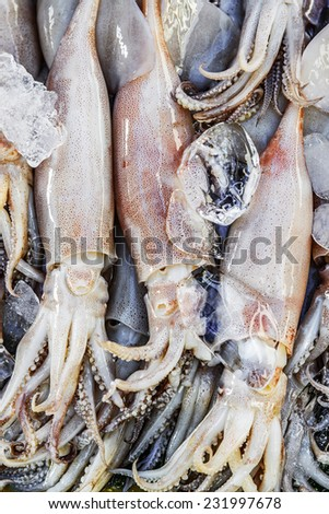 Fresh squid in the market  - stock photo