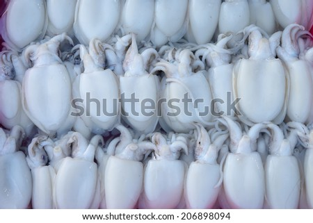 Fresh Squid lay on Tray - stock photo