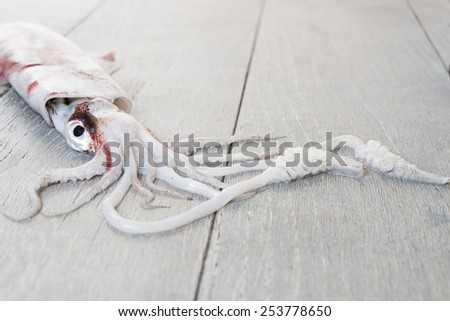 Fresh squid on wooden table, close-up on tentacles, shallow depth of field - stock photo