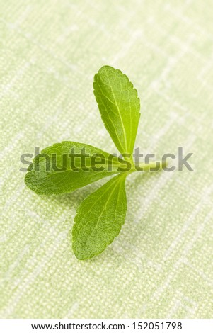 Fresh stevia leaf isolated on green background. Healthy culinary herbs. - stock photo