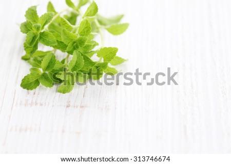 fresh stevia natural sugar - herbs and spices - stock photo