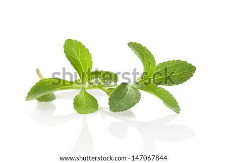 Fresh stevia sugarleaf isolated on white background with reflection. Culinary healthy herbs. Sugar supplement. Healthy eating. - stock photo