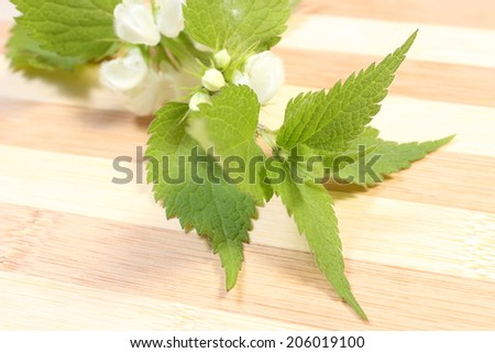 Fresh stinging nettle with white flowers. Isolated on wooden background - stock photo