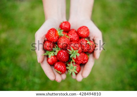 Fresh strawberries closeup. Woman holding strawberry in hands - stock photo