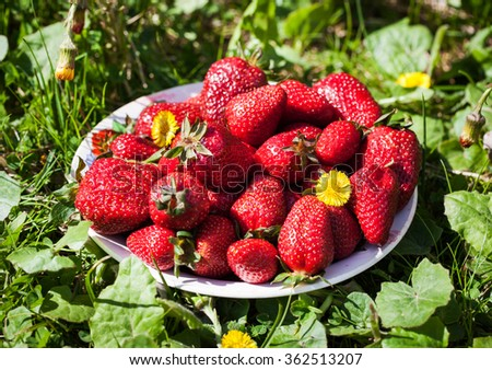 Fresh strawberries in a bowl on green grass background