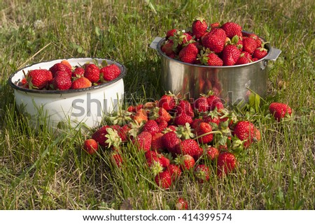 Fresh Strawberry fruit pans with berry background photo texture - stock photo
