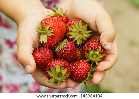 fresh strawberry hand - stock photo