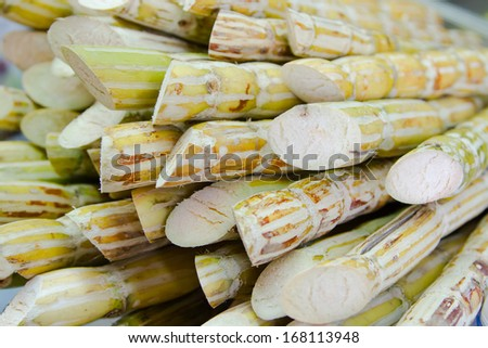 Fresh sugar cane for extracting the juice - stock photo