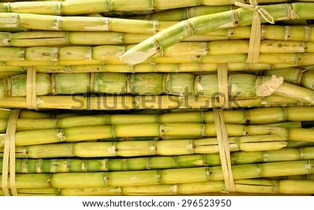 Fresh sugar cane is prepared for sweet juice extraction  - stock photo