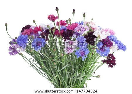 Fresh summer flower bouquet  on white background. Cornflower