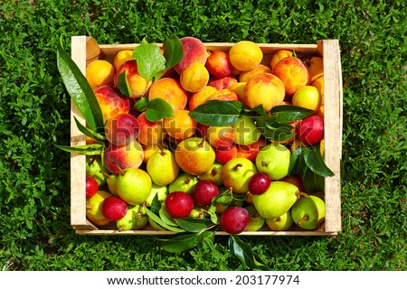 fresh summer fruit in crate on grass - stock photo