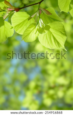 Fresh Summer Leaves on the Blurred Green Background