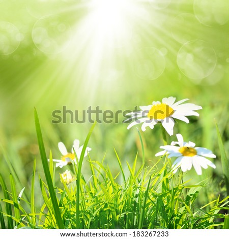 Fresh, summer nature background.
