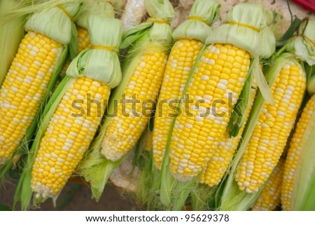 fresh sweet corn cobs - stock photo
