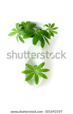 Fresh sweet woodruff leaves in a white porcelain dish on white Background